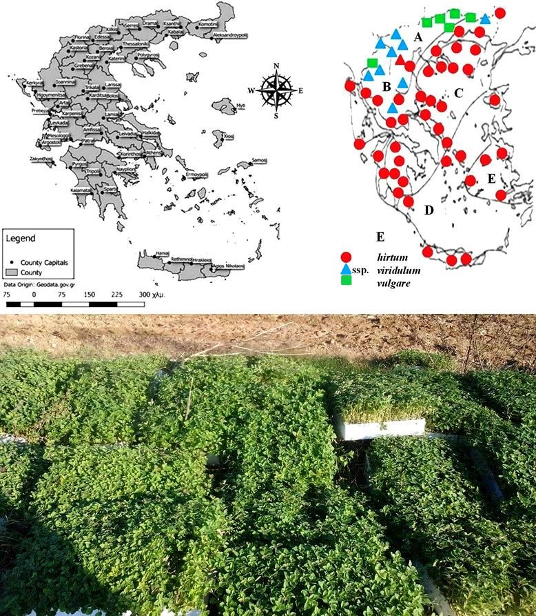 Skoufogianni et al, 2019. Ecology, Cultivation and Utilization of the Aromatic Greek Oregano
